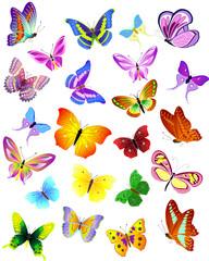 set of different butterflies