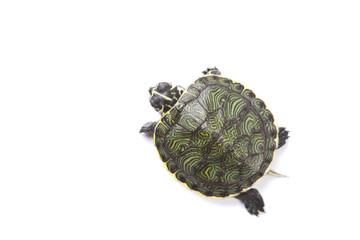 Wild animal - turtle