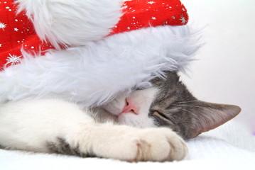 Eine Katze schläft  mit einer Samichlaus mütze auf dem Kopf.