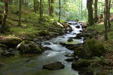 Fototapeta Waldimpression im Vessertal, Thüringen obraz