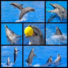 Photos mosaïques de dauphins