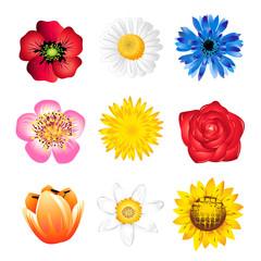 Set of spring flowers