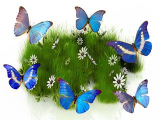 les papillons dans l'herbe