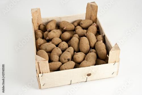 cagette de pommes de terre germ es photo libre de droits sur la banque d 39 images. Black Bedroom Furniture Sets. Home Design Ideas