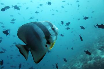 Die Unterwasserwelt der Malediven - Maldives under water