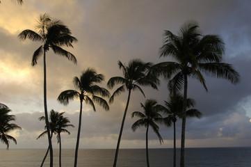 France, Martinique, la côte au Diamant