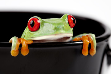 Red eyed tree frog sitting on black cup