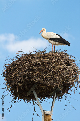 storch im nest stehend stock photo and royalty free images on pic 21844398. Black Bedroom Furniture Sets. Home Design Ideas