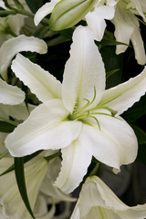 tender white lily is in a bouquet