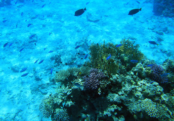 Red sea reef - Egypt