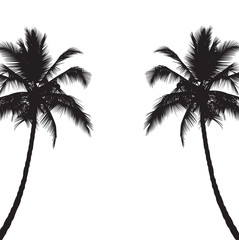 Two black silhouettes of palm trees. Vector illustration