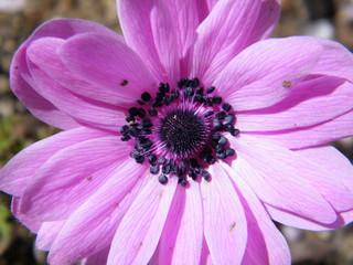 detalles de la flor