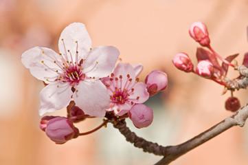 flores de árboles frutales