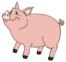 Schwein, Sau, Eber, Bauernhof, Farm