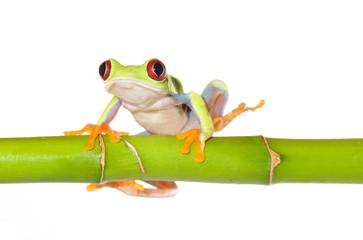 reen tree frog