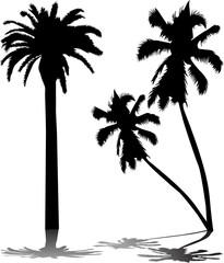 Palm Tree..