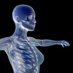 weiblicher Oberkörper Röntgenbild