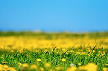 Yellow Blur