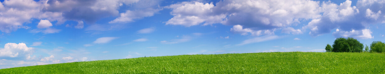 Panoramic landscape of summer meadow