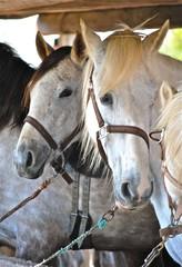 cheval ballade3