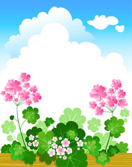 Geranium summer background