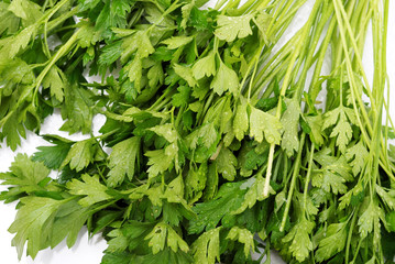 background from parsley on white