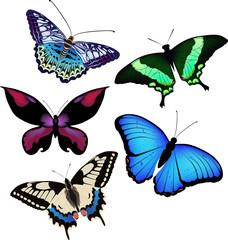Vector illustation of butterflies