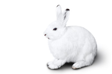 White cute rabbit