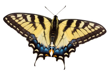 Butterfly with Clipping Path