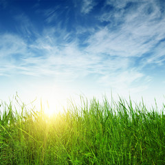 green grass and sun rays