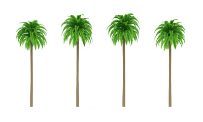 Palm trees isolated on white background