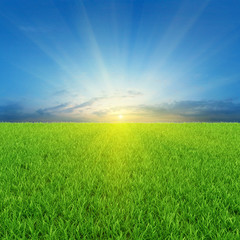 Sunny background with green grass and blue sky