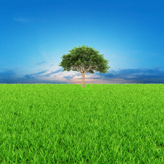 3d rendering of a green field with tree