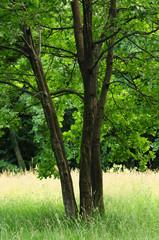 alberi 401