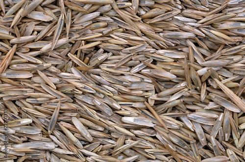 graines de gazon photo libre de droits sur la banque d