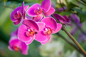 boquet of purple orchids with light streaming