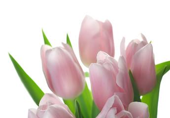 Fotoväggar - Beautiful Tulips isolated on white