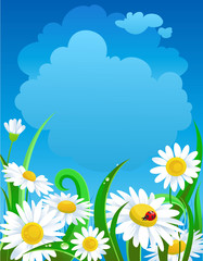 Beautiful  daisies under blue sky