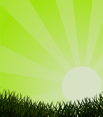 Ecological green background with grass