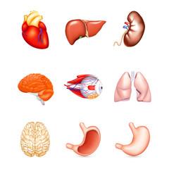 Human Internal Organs, vector