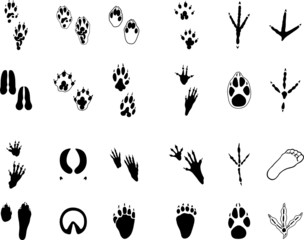 Traces of animals