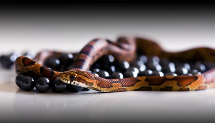 Snake and black pearls