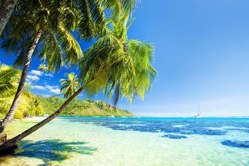 Palm tree hanging over stunning blue lagoon