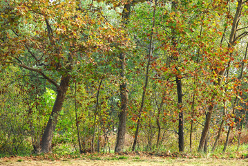 alberi 524