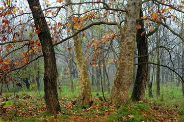 alberi 535