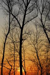 alberi 586