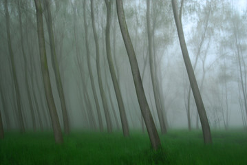 alberi 671