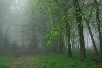 alberi 677