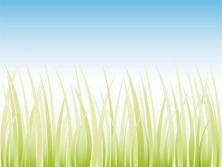 Vector grass illustration border background