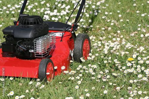 Tondeuse herbe jardin pelouse gazon couper photo for Tarif tondeuse a gazon